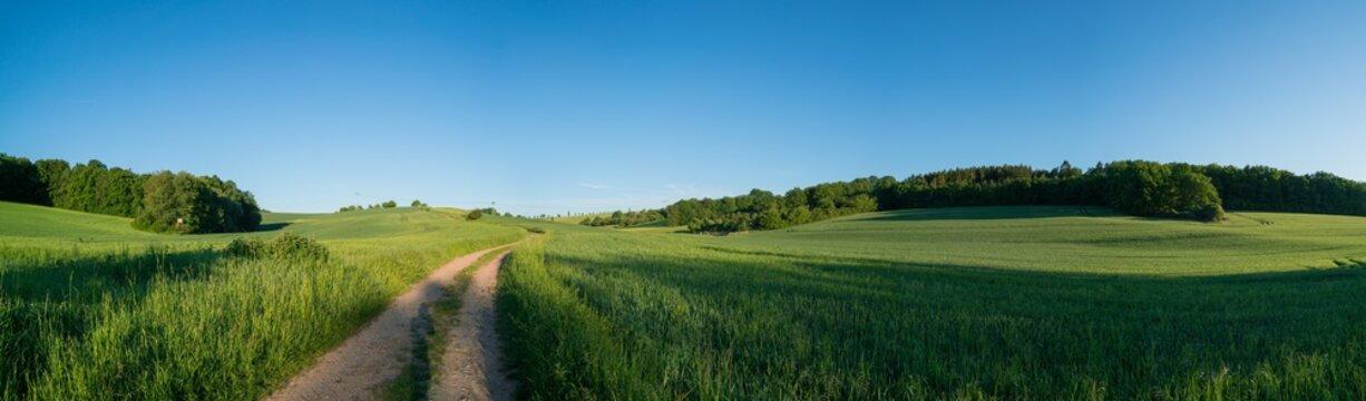 Panorama of green spring field and dirt road and clear scy