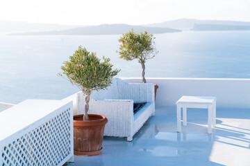 Green olive trees in flower pot. Oia village in Santorini. Greece