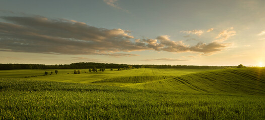 Panoramic view of empty grass field at the sunset with copy space