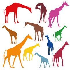 Set of colorful silhouettes of giraffes