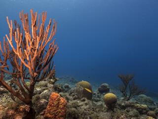 Unterwasser - Riff - Koralle - Schwamm - Ozean - Tauchen - Curacao - Karibik