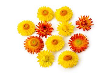 Blüten der Strohblume