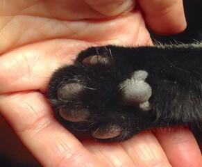 Nahaufnahme der Hinterpfote einer schwarzen Katze