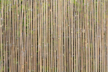 Yellow Reed Fence Pattern