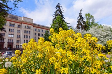 Moscow state university in flowers under blue sky in spring