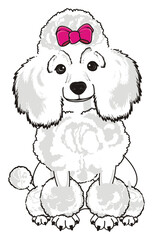 Poodle, dog, puppy, cartoon, friend, pet, animal, hair, nose, breed, grace, funny, white, girl, pink, bow, sit,