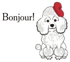 Poodle, dog, puppy, cartoon, friend, pet, animal, hair, nose, breed, grace, funny, white, girl, birette, hat, symbols, signs, objects, red, word, bonjour, sit