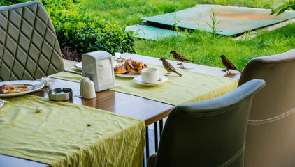 Sparrows sit on the table and eat. Dirty plate with leftovers after breakfast. Fried eggs, fried or baked peppers and bread. A fork and a knife lie on a plate.