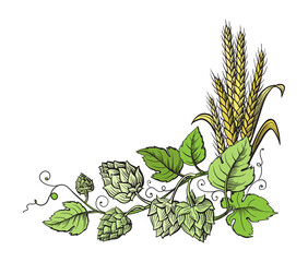 Wheat and beer hops branch with wheat ears, leaves and hop cones. Sketch and engraving design plant angular frame. All element isolated.