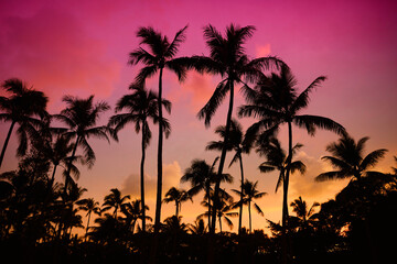 Palm trees silhouette on sunset tropical beach on Hawaii