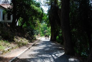 Camino de los árboles