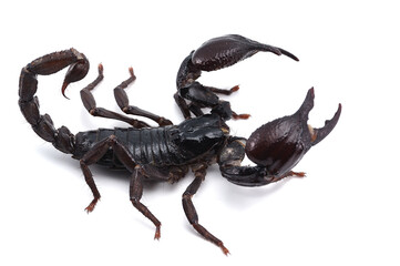 Black scorpion isolated on white background