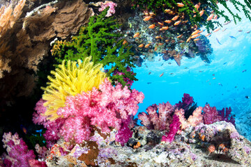 In de dag Onder water Exotic Coral Reef