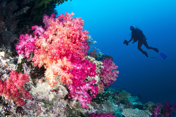 Door stickers Under water Coral reef and diver