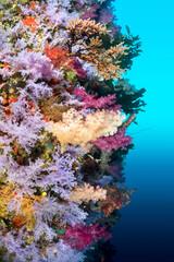 Aluminium Prints Under water Colorful reef wall