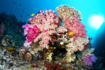 Door stickers Under water Vibrant coral reef