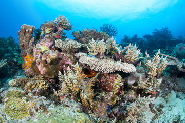 Garden Poster Under water Colorful coral reef
