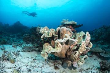 Aluminium Prints Under water Cup coral reef