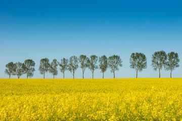 Obraz Spring landscape, Rape field - fototapety do salonu