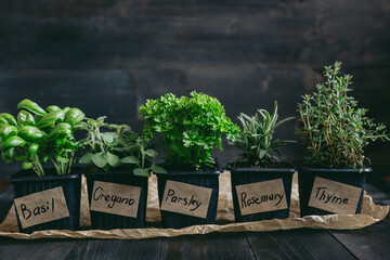 Fresh herbs on the wooden background with copy space