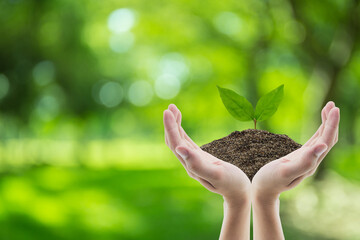 Hand holding soil and tree of nature background with environment concept.