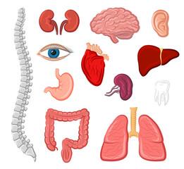 Human organ isolated icon set for anatomy design