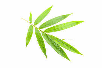 bamboo leaf on white background.