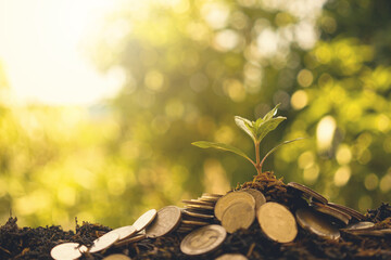 Plant money growing on pile coin and soil. Finance growing concept.