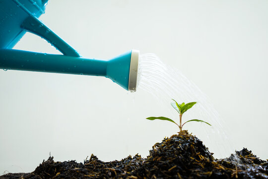 Watering plants with a watering can.