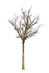 Dead hollow  tree isolated on white background