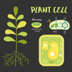 Inside theplant cell