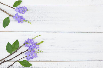 Purple flowers and green leaves and brown branches on white wood background with copy space