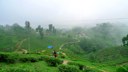 Ilam tea Garden, Nepal