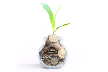 coins in glass and treetop growing, business and finance concept with copy space.