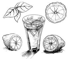 lemon vintage hand draw