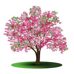 cherry tree with pink flowers