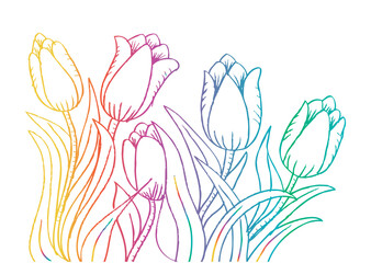 Holland tulips. Hand drawing illustration.
