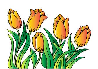 Holland tulips. Hand drawing illustration.