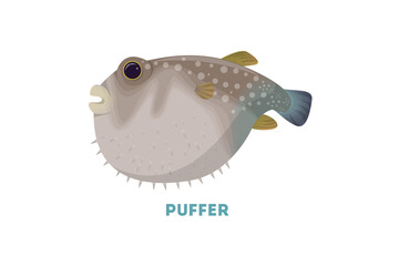 Isolated puffer fish.