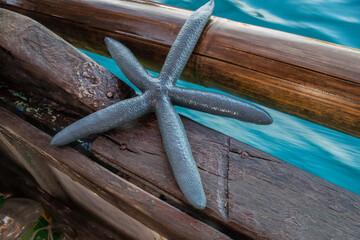 Seestern auf einem Fischerboot