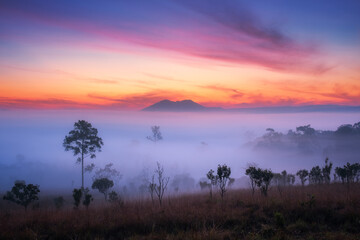 Beautiful view of forest with fog in morning at at Thung Salaeng Luang National Park Phetchabun Province,Thailand.
