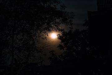 moonlight on night time