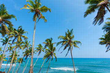 Palm trees with coconuts over ocean