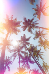 Palms trees on a beach vintage stylized with film light leaks