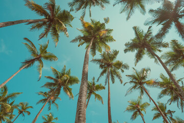 Vintage toned palms over blue sky background photo from ground up to sky
