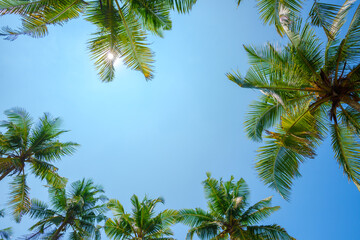 Coconut palms leafs frame over blue sky background with shining sun