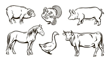 farm animals sketches