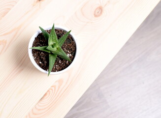 Cactus desde arriba con fondo de madera.