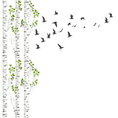Background with birch trees and birds