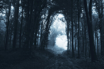 scary road through forest on Halloween night scary background
